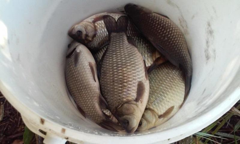 თევზის ყიდვისას ძალიან დიდი სიფრთხილე უნდა გამოიჩინოთ. ნუ შეუქმნით საფრთხეს საკუთარ ჯანმრთელობას!