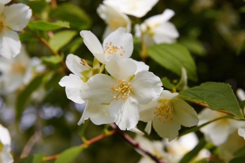 ამ ყვავილის სასარგებლო თვისებები გაგაოცებთ. მიირთვით ის და...