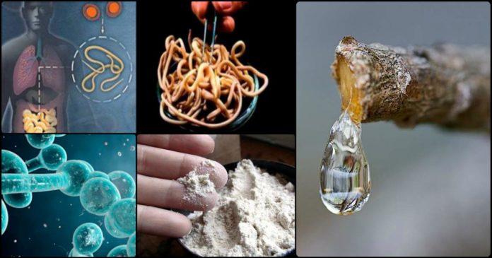 მოიშორეთ სამუდამოდ პარაზიტები და მათი კვერცხები ორგანიზმიდან! 4 რეცეპტი...